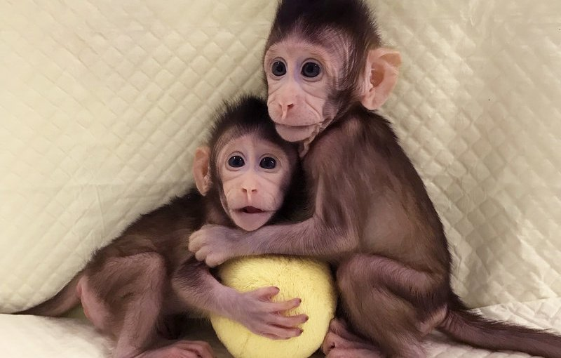 Primates Are Cloned For The First Time In China